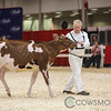 Classic2017_RedHolstein-1491