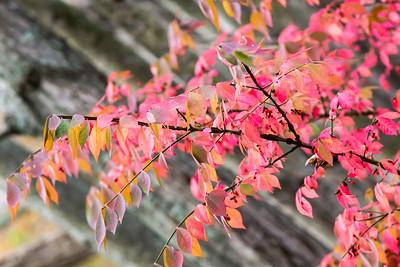 Fall Season 2017-08876