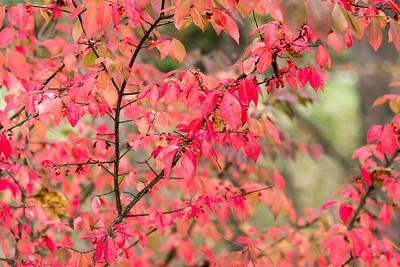 Fall Season 2017-08871