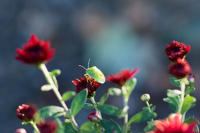 summerflowers-08243x