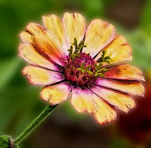 Re-imagined Flower