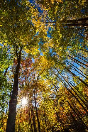 Autumn Sunburst in Tremont