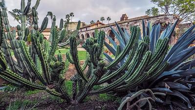Cacti at San Juan Capistrano