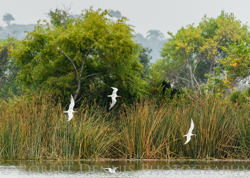 San Juaquin Wildlife Sanctuary 08-10-2017