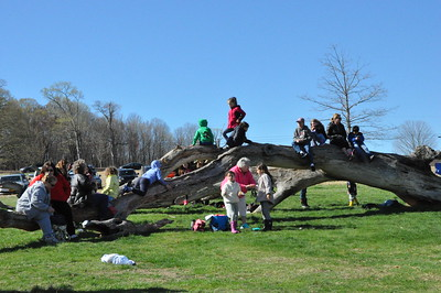 Kids playing on the Meadow Oak tree waiting for runners to come in.