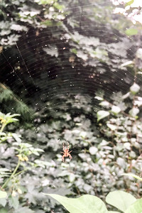 Wildfire ash caught in this spider's web