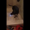 Slowmo dog shake