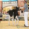 Supreme17_Holstein-4607