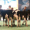 SwissExpo2017_Holstein_IMG_8680