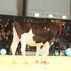 SwissExpo2017_Holstein_IMG_9228
