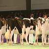 SwissExpo2017_Holstein_IMG_9195