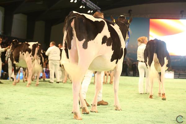 SwissExpo2017_Holstein_IMG_9112