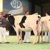 SwissExpo2017_Holstein_IMG_9093