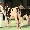 SwissExpo2017_Holstein_IMG_8828