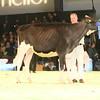 SwissExpo2017_Holstein_IMG_9060