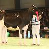 SwissExpo2017_Holstein_IMG_9200