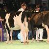 SwissExpo2017_Holstein_IMG_8836