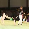 SwissExpo2017_Holstein_IMG_8716
