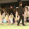 SwissExpo2017_Holstein_IMG_9191