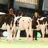 SwissExpo2017_Holstein_IMG_8769