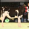 SwissExpo2017_Holstein_IMG_8858