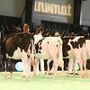 SwissExpo2017_Holstein_IMG_8775