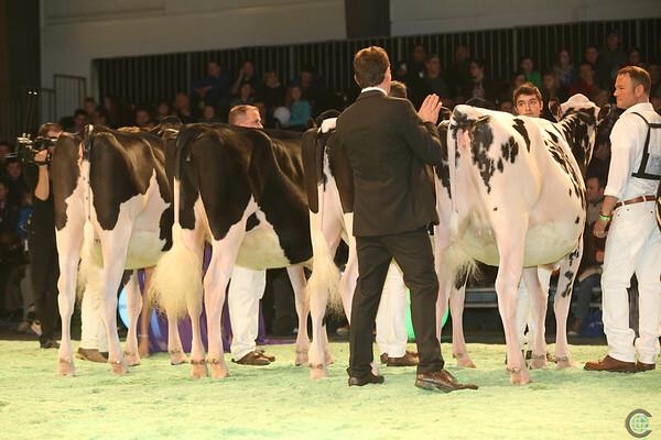 SwissExpo2017_Holstein_IMG_9192