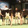 SwissExpo2017_Holstein_IMG_8981