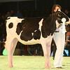 SwissExpo2017_Holstein_IMG_8810