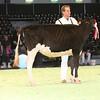 SwissExpo2017_Holstein_IMG_8811