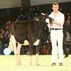 SwissExpo2017_Holstein_IMG_8864