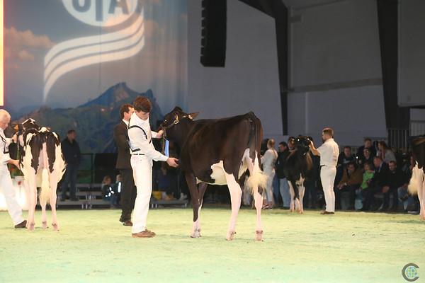 SwissExpo2017_Holstein_IMG_8978