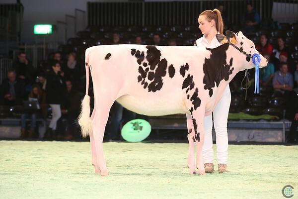 SwissExpo2017_Holstein_IMG_8809