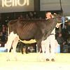 SwissExpo2017_Holstein_IMG_9061
