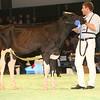SwissExpo2017_Holstein_IMG_8859