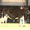 SwissExpo2017_Holstein_IMG_9226