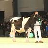 SwissExpo2017_Holstein_IMG_9224