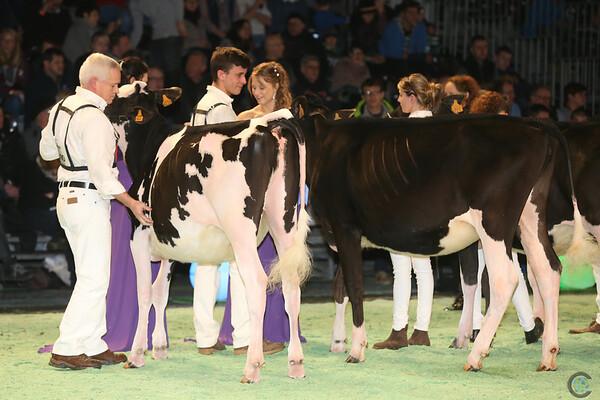 SwissExpo2017_Holstein_IMG_8937