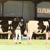 SwissExpo2017_Holstein_IMG_9077