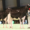 SwissExpo2017_Holstein_IMG_9206