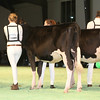 SwissExpo2017_Holstein_IMG_8904