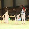 SwissExpo2017_Holstein_IMG_9198
