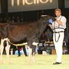 SwissExpo2017_Holstein_IMG_8862