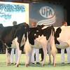 SwissExpo2017_Holstein_IMG_9089