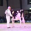 SwissExpo2017_Holstein_IMG_9273