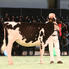 SwissExpo2017_Holstein_IMG_8963