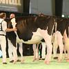 SwissExpo2017_Holstein_IMG_9182