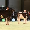 SwissExpo2017_Holstein_IMG_8956