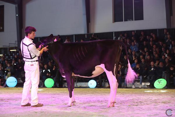 SwissExpo2017_Holstein_IMG_9275