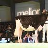 SwissExpo2017_Holstein_IMG_9052